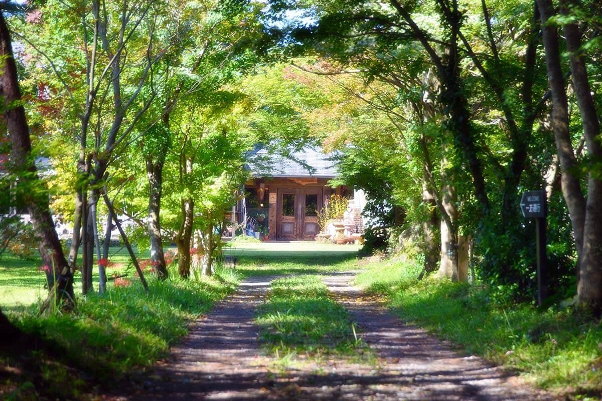 森のアトリエの緑のトンネルの写真